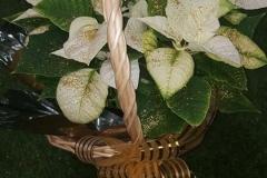 planta_individual2