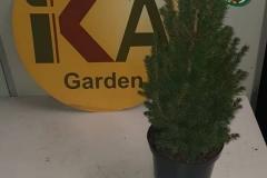 planta_individual3