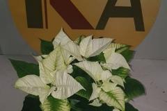 planta_individual7