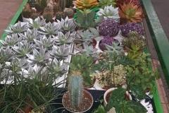 plantas_color