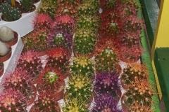 plantas_color2