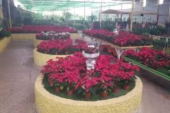 plantas_pascua_general