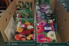 plantas_semillas2