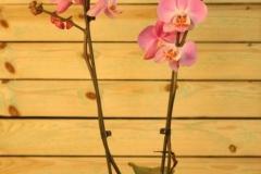 Orquídea 2 varas