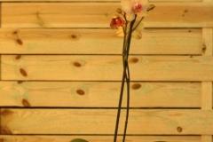 Orquídea amarilla 1 vara