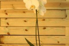 Orquídea blanca 1 vara